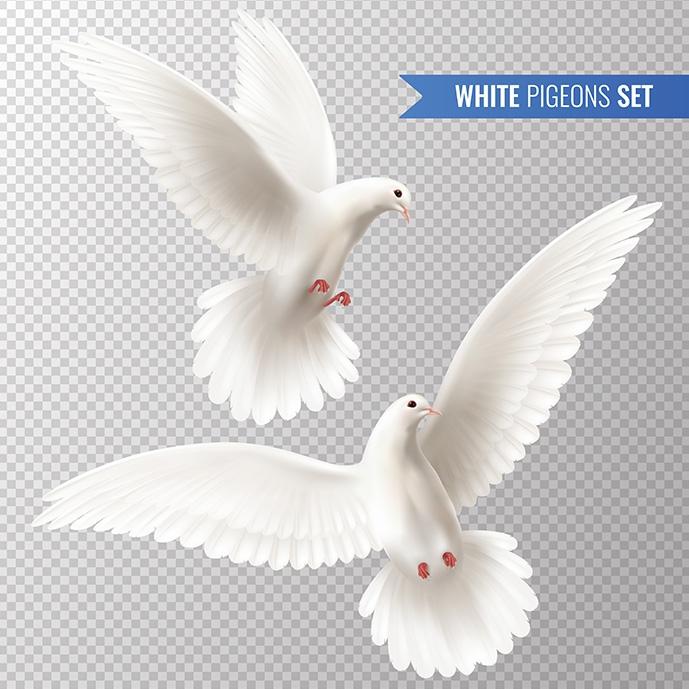 وکتور کبوترهای سفید