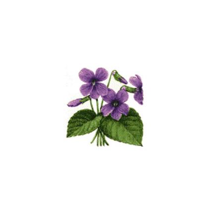 violet_dxf