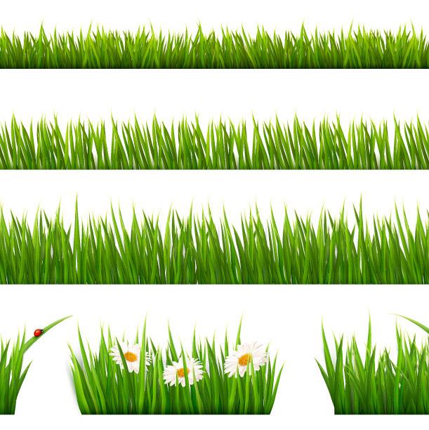 grass-vector-illustrator-23