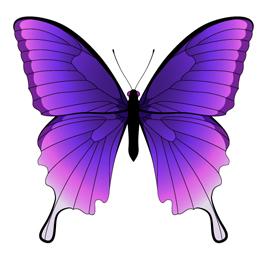 design-a-butterfly-(18)