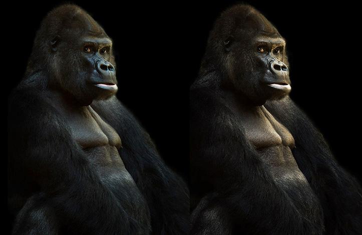 Luminosity-Masks-in-Adobe-Photoshop