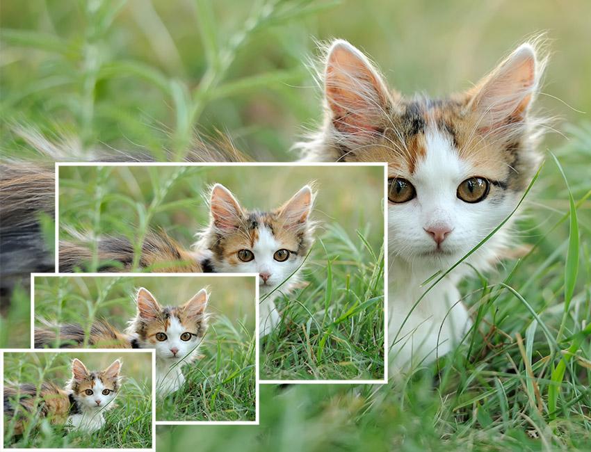 روشهای تغییر اندازه عکس در فتوشاپ